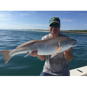 Red Drum / Redfish